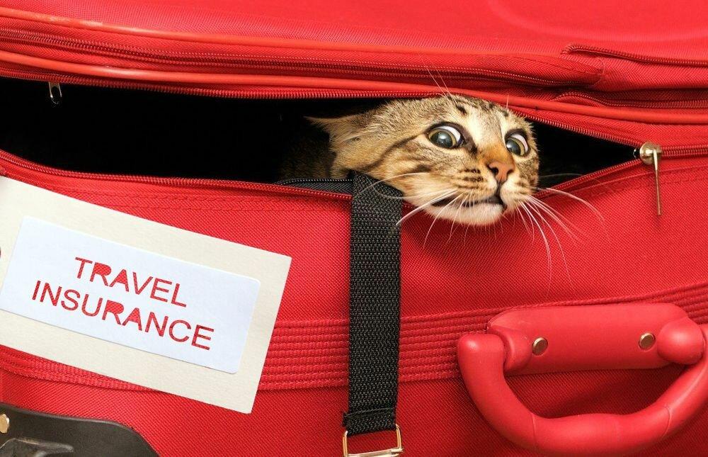 страховка багажа